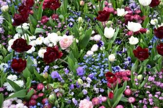 fleurs-du-printemps